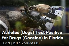 Florida Racing Greyhounds Test Positive for Cocaine