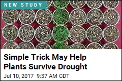 Simple Trick May Help Plants Survive Drought