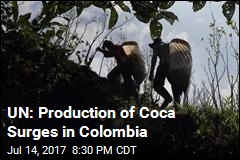 UN: Production of Coca Surges in Colombia