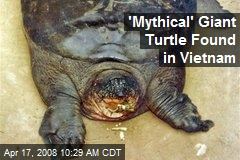 'Mythical' Giant Turtle Found in Vietnam