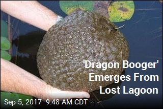 'Dragon Booger' Emerges From Lost Lagoon