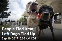 People Fled Irma, Left Dogs Tied Up