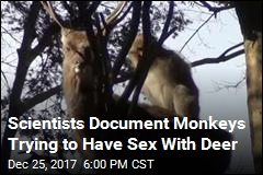 Scientists Document Monkeys Trying to Have Sex With Deer