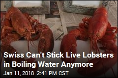 New Swiss Law Changes How Lobsters Must Be Boiled