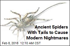 Ancient Spiders With Tails to Cause Modern Nightmares