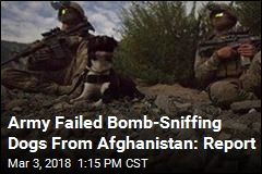 Army Failed Bomb-Sniffing Dogs From Afghanistan: Report