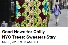 Good News for Chilly NYC Trees: Sweaters Stay