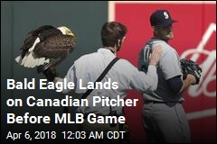 Bald Eagle Lands on Canadian Pitcher Before MLB Game