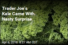 Trader Joe's Kale Came With Nasty Surprise