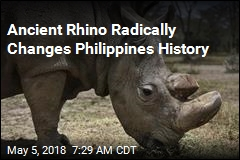 Ancient Rhino Radically Changes Philippines History