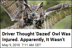 Good Samaritan Picks Up Owl, Owl Traps Good Samaritan