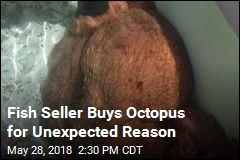 Fish Seller Buys Octopus, But Not for Sale