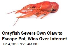 Plucky Crayfish Escapes Pot to Joy of Internet