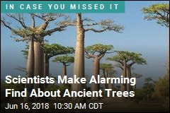 Scientists Discover Big Problem With Ancient Trees