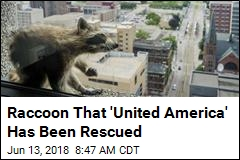 Raccoon That 'United America' Has Been Rescued