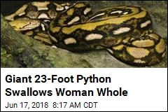 Giant 23-Foot Python Swallows Woman Whole