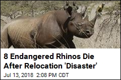 8 Endangered Rhinos Die After Relocation 'Disaster'