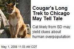 Cougar's Long Trek to Chicago May Tell Tale