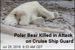 Polar Bear Killed in Attack on Cruise Ship Guard