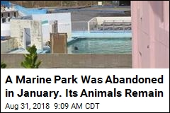 A Marine Park Was Abandoned in January. Its Animals Remain