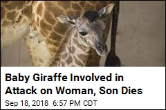 Baby Giraffe Whose Mother Attacked Woman, Son Dies