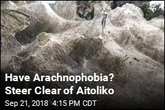 Have Arachnophobia? Steer Clear of Aitoliko