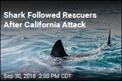 Shark Followed Rescuers After California Attack