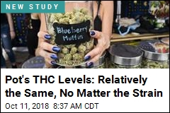 Think That Pot Strain Is Way Stronger Than Most? Maybe Not