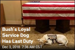 For Bush's Dog, It's 'Mission Complete'