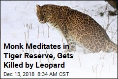 Monk Meditates in Tiger Reserve, Gets Killed by Leopard