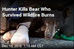 Hunter Kills Bear Who Survived Wildfire Burns