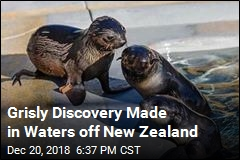 Grisly Discovery Made in Waters off New Zealand