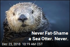 Aquarium Very Sorry for Fat-Shaming Sea Otter