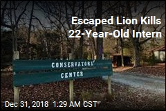 Escaped Lion Kills 22-Year-Old Intern