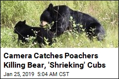 Father, Son Sentenced for 'Egregious' Bear Cub Poaching
