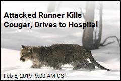 Runner Prevails in Man vs. Mountain Lion