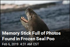 Working Memory Stick Found in Frozen Seal Poo