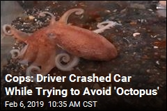 Cops: Driver Crashed Car to Avoid Nonexistent Octopus