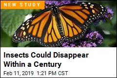Insects Could Disappear Within a Century