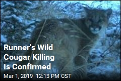 Cougar Killed by Runner Was Fierce 'Kitten'