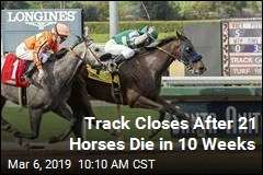 Horse Track Blows Past 2018 Death Toll in 10 Weeks
