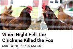 Fowl Play: Chickens Team Up and Mutilate Fox