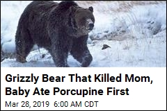 Bear That Killed Mom, Baby Was Starving to Death