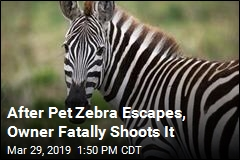 Pet Zebra Escapes in Florida, Is Killed by Owner