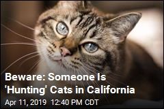 Beware: Someone Is 'Hunting' Cats in California
