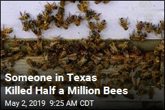 Arsonist Kills Half a Million Bees