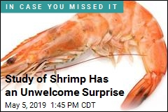 Every Shrimp Tested Had Traces of Cocaine