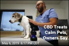 CBD Treats Calm Pets, Owners Say