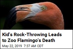 Kid's Rock-Throwing Leads to Zoo Flamingo's Death