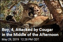 Dad Saves 4-Year-Old Attacked by Cougar